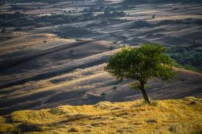 Wheat and hay fields, Avellino, Italy
