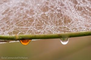 Gocce di pioggia su un vecchio stelo coperto di ragnatele