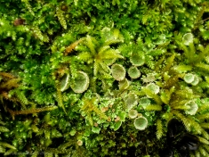 Musks & Lichens