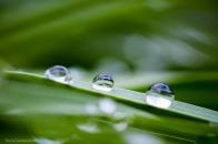 Gocce di pioggia sugli steli d'erba
