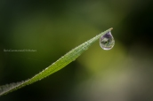Una goccia di pioggia in bilico