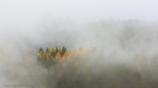 Trentino woods, Italy