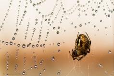 Un ragno bagnato